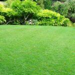 Maintenance of Lawn/Garden